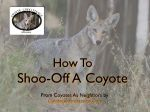 Video on How to Shoo Off A Coyote